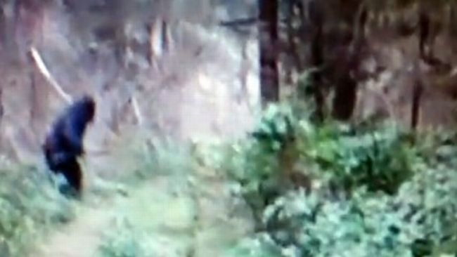 Man Dressed As Bigfoot killed, Creature Spotted In Ohino ...