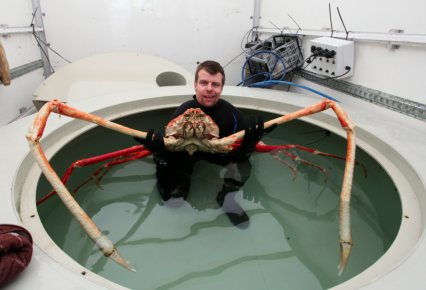 Giant crab with 9ft claws arrives in Blackpool