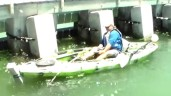 552 pound grouper fish:  Watch Fisherman Giggle With Glee Reeling Giant