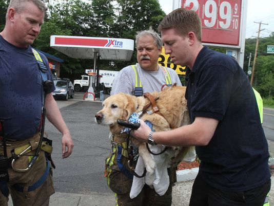 Figo The Service Dog Protects Owner From Oncoming Bus