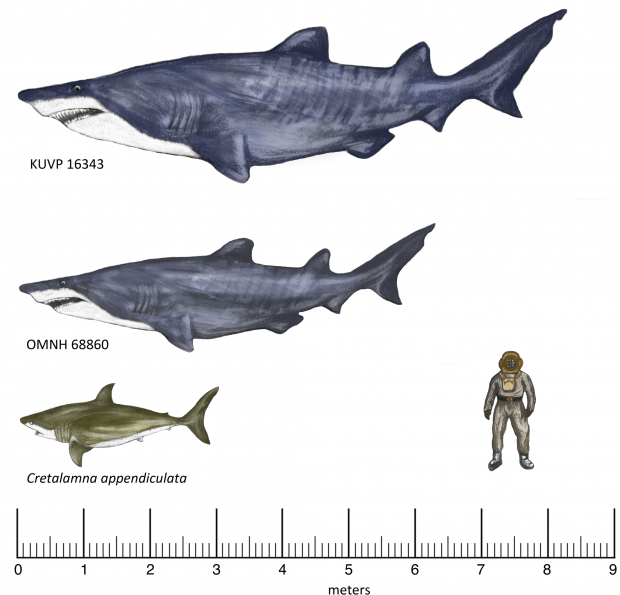 Gigantic shark Fossil Found In Texas