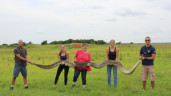giant python florida:  You Wont Believe The Size Of This Snake