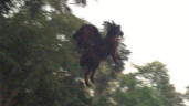 Jersey Devil sighting:  Video Proof Of Creature? (PHOTO)