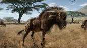 Ancient wildebeest Dino-like Ancient Wildebeest (PHOTO)