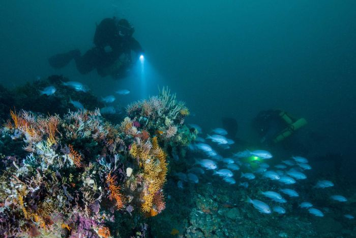 A diver near the Drowned Apostles, 50 metres below the ocean's surface. Supplied: Liz Rogers