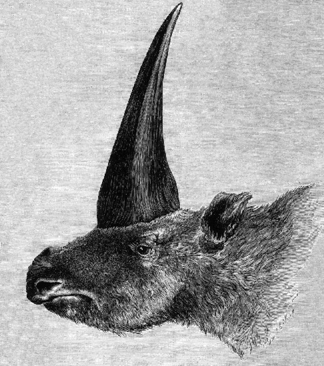 First published restoration (1878) of E. sibiricum, by Rashevsky, under supervision of A.F. Brant (Image via Wikimedia Commons, Public Domain)