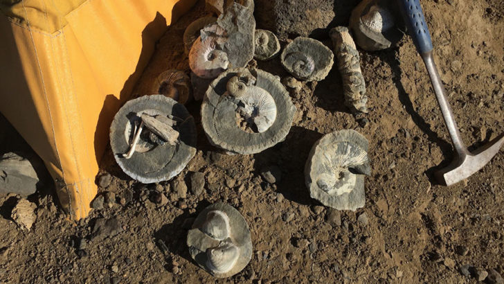 71-million-year-old fossils Unearthed In Antarctica (PHOTO)